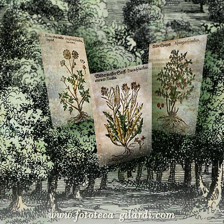 bosco e tavole di piante officinali spontanee, stampe antiche; elaborazione ©Fototeca Gilardi