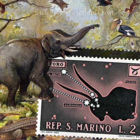 Animali della fauna orientale: l'elefante indiano, litografia XIX sec. eleborazione ©Fototeca Gilardi