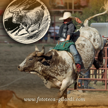 Rodeo, fotografia di Raffaella Milandri, U.S.A., agosto 2010. elaborazione ©Fototeca Gilardi